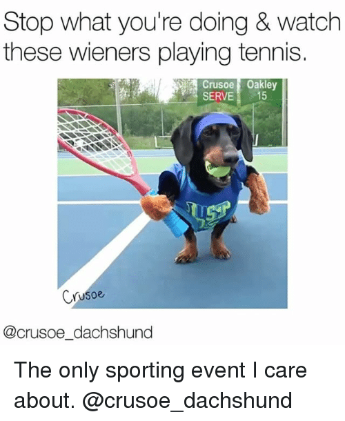 wieners: Stop what you're doing & watch  these wieners playing tennis.  Crusoe Oakley  SERVE 15  Crusoe  @crusoe dachshund The only sporting event I care about. @crusoe_dachshund