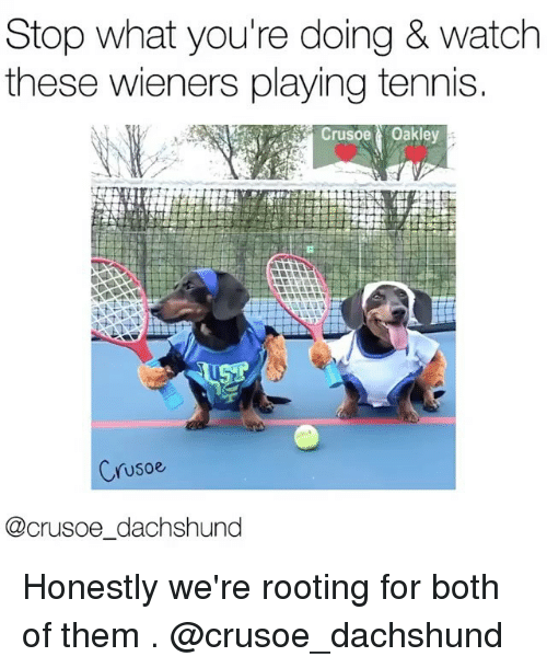 wieners: Stop what you're doing & watch  these wieners playing tennis.  Crusoe Oakley  Crusoe  @crusoe dachshund Honestly we're rooting for both of them . @crusoe_dachshund