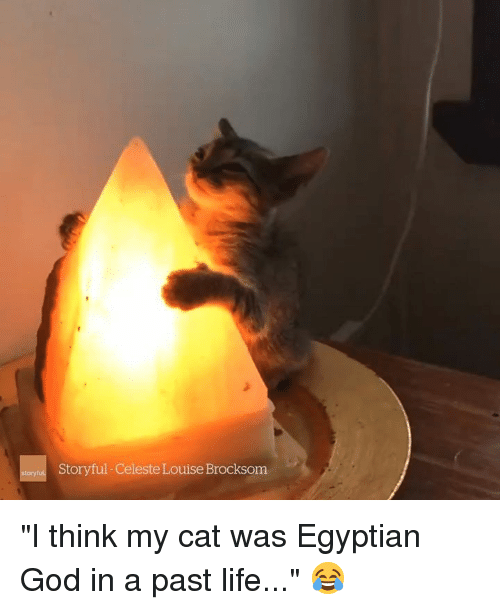 "God, Life, and Egyptian: Storyful-Celeste Louise Brocksom ""I think my cat was Egyptian God in a past life..."" 😂"