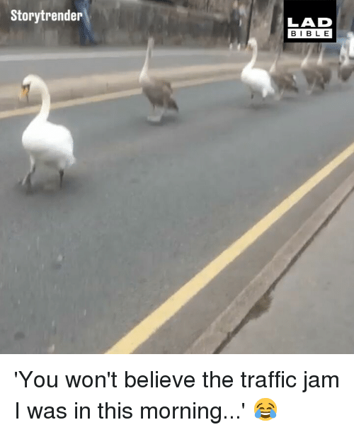 traffic jam: Storytrender  LAD  BIB LE 'You won't believe the traffic jam I was in this morning...' 😂