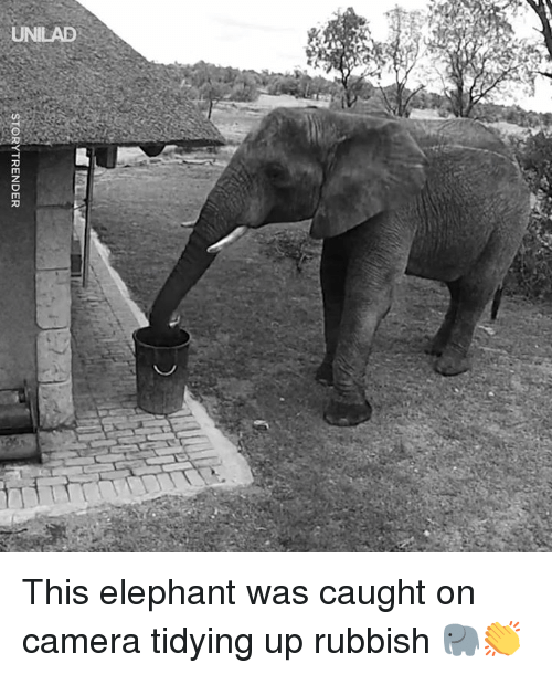caught on camera: STORYTRENDER This elephant was caught on camera tidying up rubbish 🐘👏