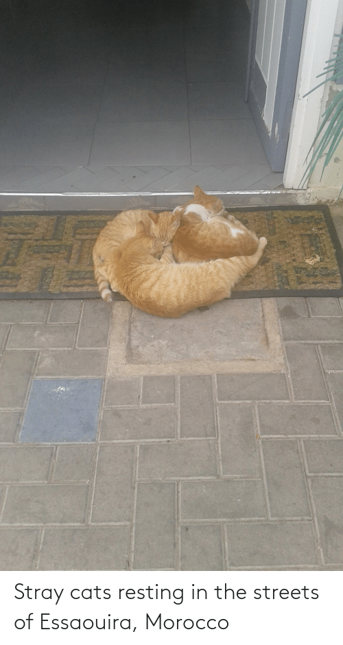 Resting: Stray cats resting in the streets of Essaouira, Morocco