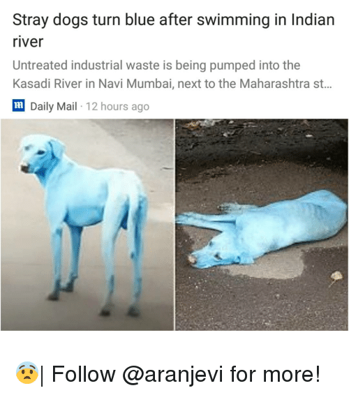 navi: Stray dogs turn blue after swimming in Indian  river  Untreated industrial waste is being pumped into the  Kasadi River in Navi Mumbai, next to the Maharashtra st..  lm  Daily Mail 12 hours ago 😨| Follow @aranjevi for more!
