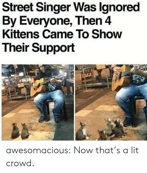 Lit, Tumblr, and Blog: Street Singer Was lgnored  By Everyone, Then 4  Kittens Came To Show  Their Support awesomacious:  Now that's a lit crowd.