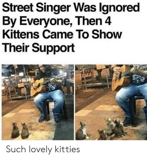 Kitties, Kittens, and Singer: Street Singer Was lgnored  By Everyone, Then4  Kittens Came To Show  Their Support Such lovely kitties