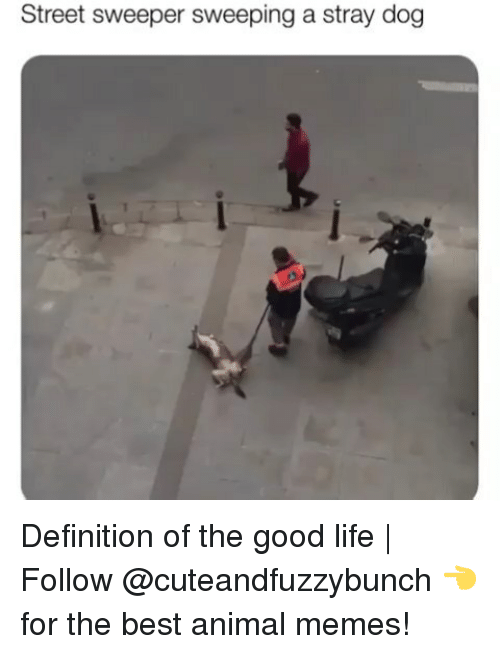 Best Animal Memes: Street sweeper sweeping a stray dog Definition of the good life | Follow @cuteandfuzzybunch 👈 for the best animal memes!