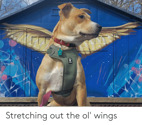 Wings: Stretching out the ol' wings
