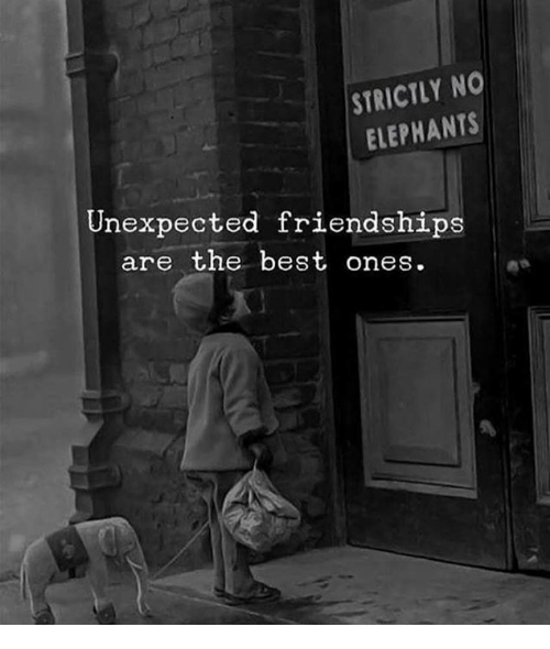 Best, Elephants, and The Best: STRICTLY NO  ELEPHANTS  Unexpected friendships  are the best ones.