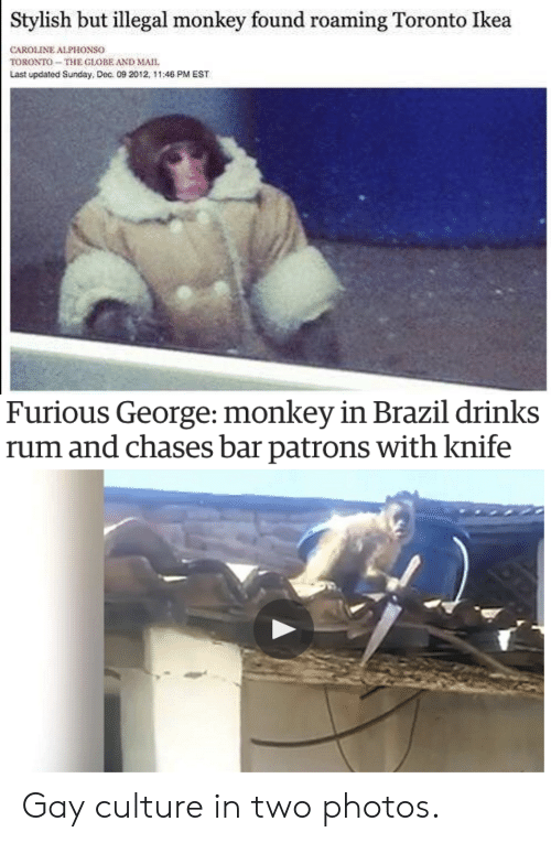 Ikea, Brazil, and Monkey: Stylish but illegal monkey found roaming Toronto Ikea  CAROLINE ALPHONSO  TORONTO-THE GLOBE AND MAII  Last updated Sunday, Dec. 09 202, 11:46 PM EST   Furious George: monkey in Brazil drinks  rum and chases bar patrons with knife Gay culture in two photos.