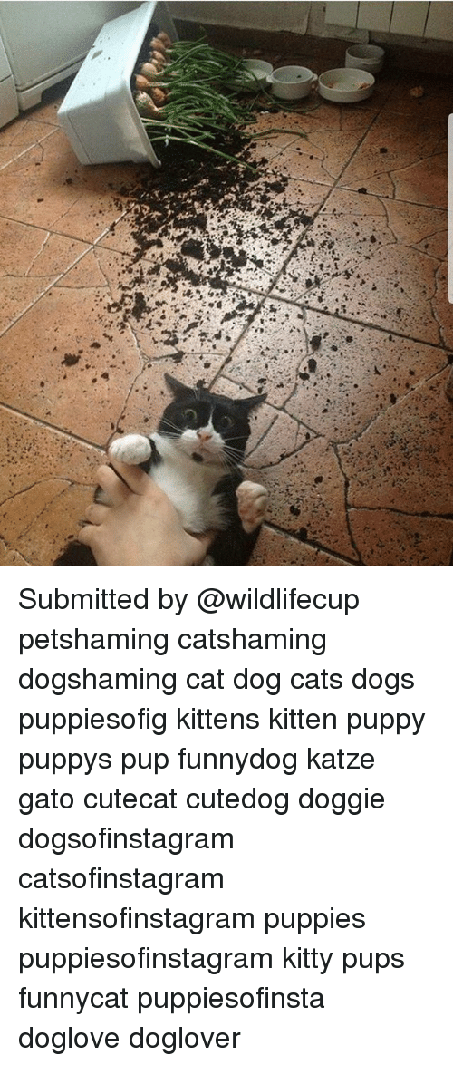 Cats, Dogs, and Memes: Submitted by @wildlifecup petshaming catshaming dogshaming cat dog cats dogs puppiesofig kittens kitten puppy puppys pup funnydog katze gato cutecat cutedog doggie dogsofinstagram catsofinstagram kittensofinstagram puppies puppiesofinstagram kitty pups funnycat puppiesofinsta doglove doglover
