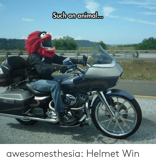 Tumblr, Animal, and Blog: Such an animal.c. awesomesthesia:  Helmet Win
