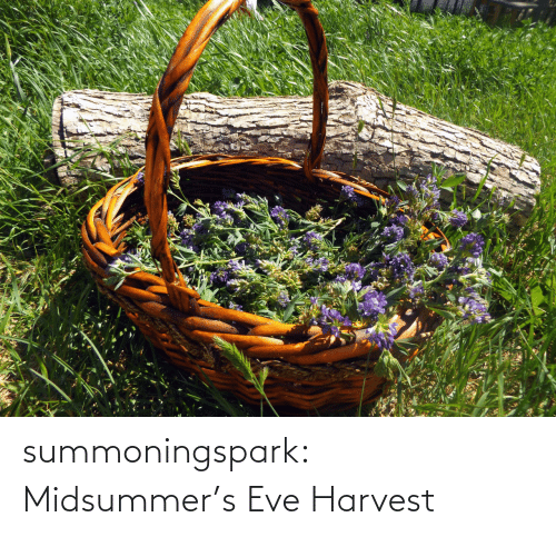 eve: summoningspark:  Midsummer's Eve Harvest