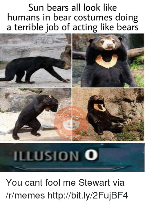 Stewart: Sun bears all look like  humans in bear costumes doing  a terrible job of acting like bears  ILLUSION O You cant fool me Stewart via /r/memes http://bit.ly/2FujBF4