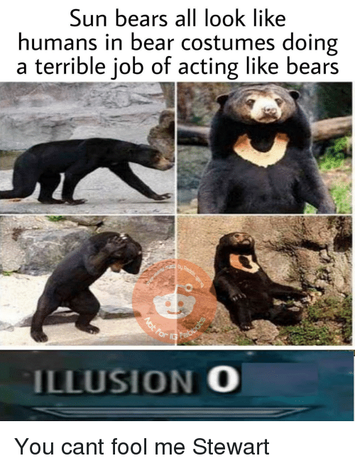 Bear, Bears, and Acting: Sun bears all look like  humans in bear costumes doing  a terrible job of acting like bears  ILLUSION O You cant fool me Stewart