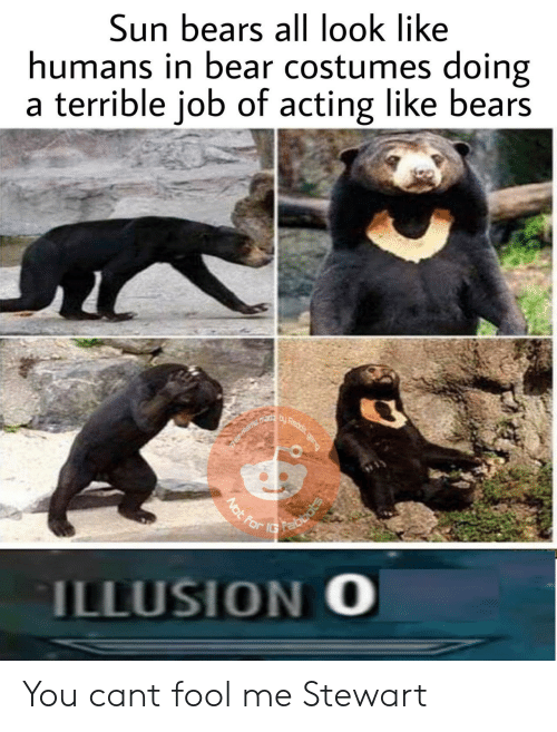 Stewart: Sun bears all look like  humans in bear costumes doing  a terrible job of acting like bears  ILLUSION O You cant fool me Stewart