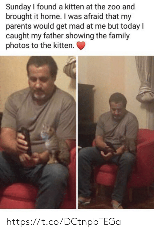 Family, Memes, and Parents: Sunday I found a kitten at the zoo and  brought it home. I was afraid that my  parents would get mad at me but today l  caught my father showing the family  photos to the kitten. https://t.co/DCtnpbTEGa