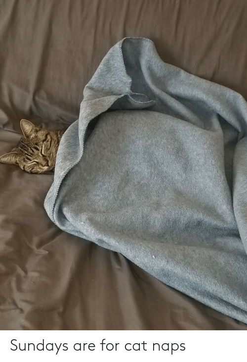 Cat, For, and Naps: Sundays are for cat naps