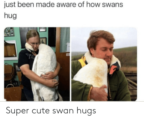 cute: Super cute swan hugs
