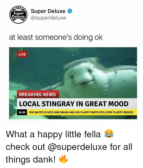 Superate: Super Deluxe  Super  eluxe@superdeluxe  at least someone's doing ok  LIVE  BREAKING NEWS  LOCAL STINGRAY IN GREAT MOOD  18:30  THE WATER IS NICE AND WARM AND HIS FLAPPY PARTS FEEL VERY FLAPPY INDEED What a happy little fella 😂 check out @superdeluxe for all things dank! 🔥