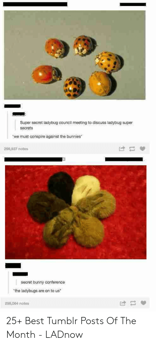 bunny: Super secret ladybug council meeting to discuss ladybug super  secrets  we must conspire against the bunnies  299,937 notes  secret bunny canference  the ladybugs are on to us  298,064 noten 25+ Best Tumblr Posts Of The Month - LADnow