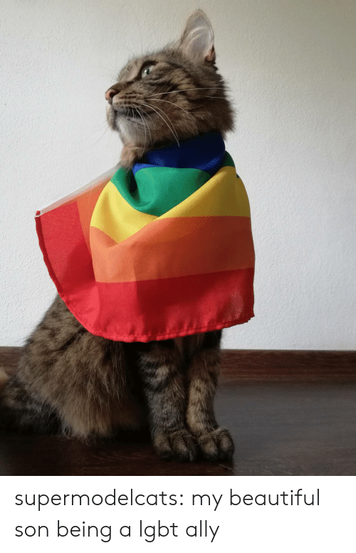 Beautiful, Lgbt, and Tumblr: supermodelcats:  my beautiful son being a lgbt ally