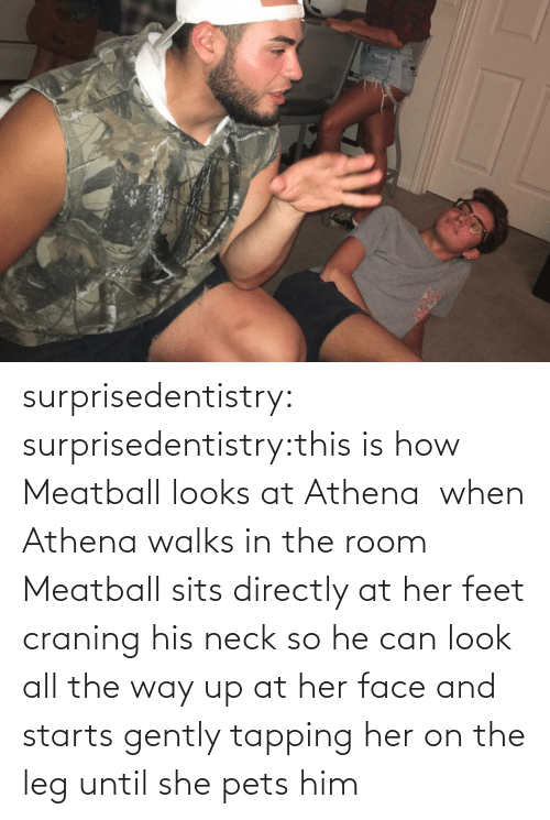 All The: surprisedentistry:  surprisedentistry:this is how Meatball looks at Athena  when Athena walks in the room Meatball sits directly at her feet craning his neck so he can look all the way up at her face and starts gently tapping her on the leg until she pets him