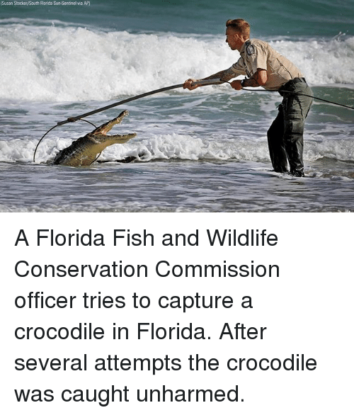 25 best memes about sentinel sentinel memes for Florida fish and wildlife commission