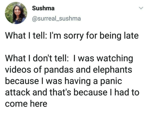 surreal: Sushma  @surreal_sushma  What I tell: I'm sorry for being late  What I don't tell: I was watching  videos of pandas and elephants  because I was having a panic  attack and that's because I had to  come here