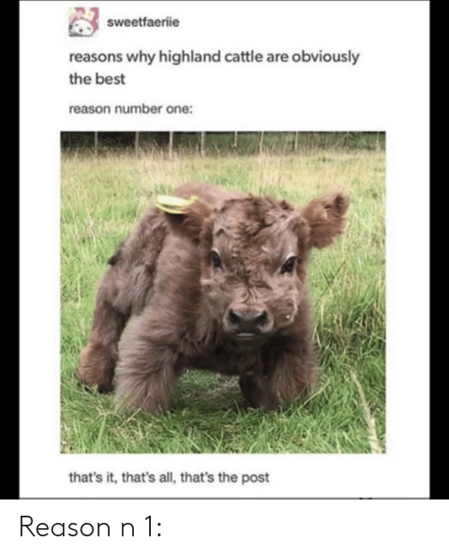 number one: sweetfaeriie  reasons why highland cattle are obviously  the best  reason number one:  that's it, that's all, that's the post Reason n 1: