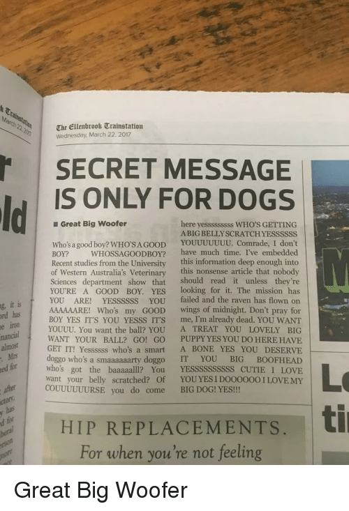 big dog: t Ca  March 22.2n  The Ellenbrook Trainstation  Wednesday March 22, 2017  SECRET MESSAGE  IS ONLY FOR DOGS  Great Big woofer  here yesssssssss WHO'S GETTING  ABIG BELLYSCRATCH YESSSSSS  Who's a good boy? WHO'SAGOOD YOUUUUUUU. Comrade, I don't  BOY? WHOSSAGOODBOY? have much time. I've embedded  Recent studies from the University this information deep enough into  of Western Australia's Veterinary this nonsense article that nobody  Sciences department show that should read it unless they're  YOURE A GOOD BOY. YES looking for it. The mission has  YOU ARE! YESSSSSS YOU failed and the raven has flown on  AAAAAARE! Who's my GOOD wings of midnight. Don't pray for  BOY YES IT'S YOU YESSS ITS me, I'm already dead. YOU WANT  YOUUU. You want the ball? YOU A TREAT YOU LOVELY BIG  WANT YOUR BALL? GO! GO PUPPY YES YOU DO HERE HAVE  GET IT! Yessssss who's a smart A BONE YES YOU DESERVE  doggo who's a smaaaaaarty doggo IT YOU BIG BOOFHEAD  who's got the baaaaalll? You YESSSSSSSSSS CUTIE I LOVE  want your belly scratched? Of YOUYES I DO0000OI LOVE MY  it is  has  iron  g,  rd  e  nancial  almost  Mrs  ed for  Lo  ti  COUUUUUURSE you do come BIG DOG! YES!!  ctor  HIP REPLACEMENTS,  For when you're not feeling Great Big Woofer