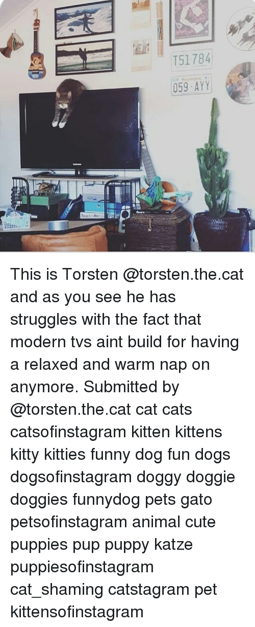 Cats, Cute, and Dogs: T51784 This is Torsten @torsten.the.cat and as you see he has struggles with the fact that modern tvs aint build for having a relaxed and warm nap on anymore. Submitted by @torsten.the.cat cat cats catsofinstagram kitten kittens kitty kitties funny dog fun dogs dogsofinstagram doggy doggie doggies funnydog pets gato petsofinstagram animal cute puppies pup puppy katze puppiesofinstagram cat_shaming catstagram pet kittensofinstagram