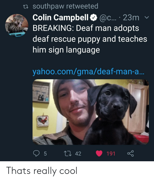 Cool, Puppy, and Yahoo: ta southpaw retweeted  Colin Campbell@c... 23m  BREAKING: Deaf man adopts  deaf rescue puppy and teaches  him sign languag  yahoo.com/gma/deaf-man-a Thats really cool