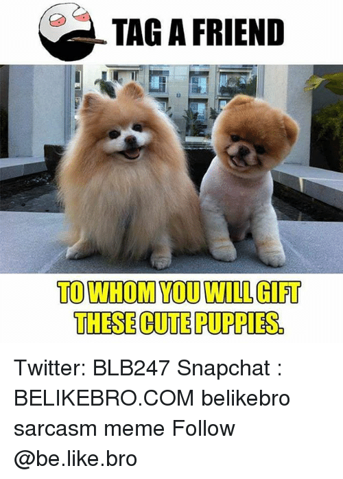 To Whom: TAG A FRIEND  TO WHOM YOU WILL GIFT  THESE CUTE PUPPIES. Twitter: BLB247 Snapchat : BELIKEBRO.COM belikebro sarcasm meme Follow @be.like.bro