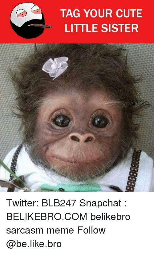Be Like, Cute, and Meme: TAG YOUR CUTE  LITTLE SISTER Twitter: BLB247 Snapchat : BELIKEBRO.COM belikebro sarcasm meme Follow @be.like.bro