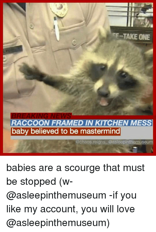 scourge: TAKE ONE  RACCOON FRAMED IN KITCHEN MESS  baby believed to be mastermind  @chaos reigns @asleepinthemuseum babies are a scourge that must be stopped (w- @asleepinthemuseum -if you like my account, you will love @asleepinthemuseum)