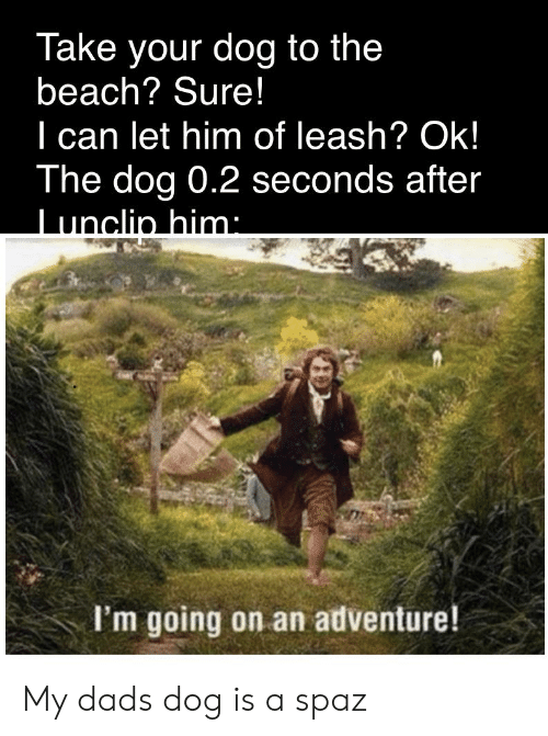 Beach, Dank Memes, and Dog: Take your dog to the  beach? Sure!  can let him of leash? Ok!  The dog 0.2 seconds after  Tunclin him:  I'm going on an adventure! My dads dog is a spaz