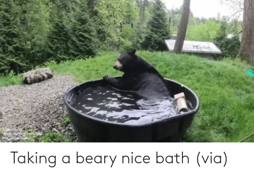 bath: Taking a beary nice bath (via)