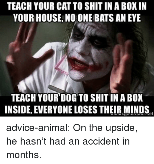 Advice, Shit, and Tumblr: TEACH YOUR CAT TO SHIT IN A BOX IN  YOUR HOUSE, NO ONE BATS AN EYE  TEACH YOUR DOG TO SHIT IN A BOX  INSIDE, EVERYONE LOSES THEIR MINDS advice-animal:  On the upside, he hasn't had an accident in months.