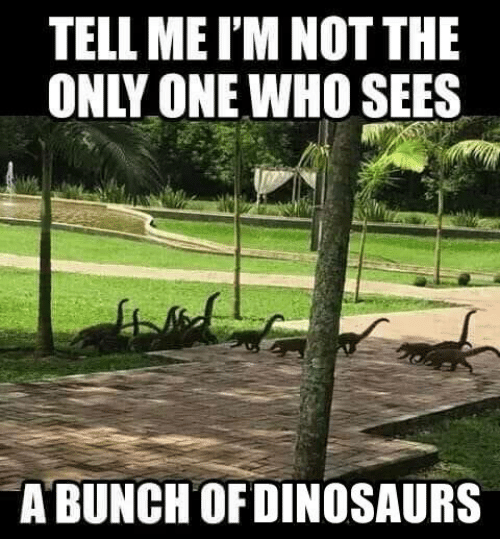 not the only one: TELL ME I'M NOT THE  ONLY ONE WHO SEES  12  A BUNCHOFDINOSAURS