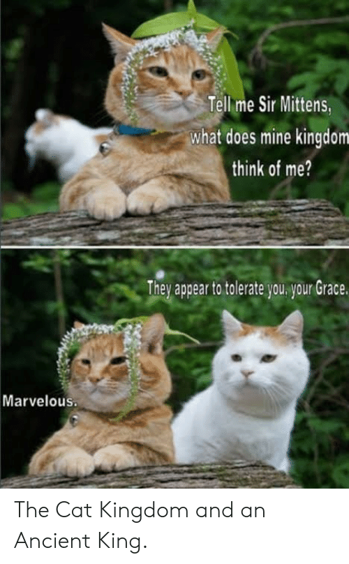 What Does, Ancient, and Marvelous: Tell me Sir Mittens  what does mine kingdom  think of me?  They appear to tolerate you your Grace.  Marvelous The Cat Kingdom and an Ancient King.