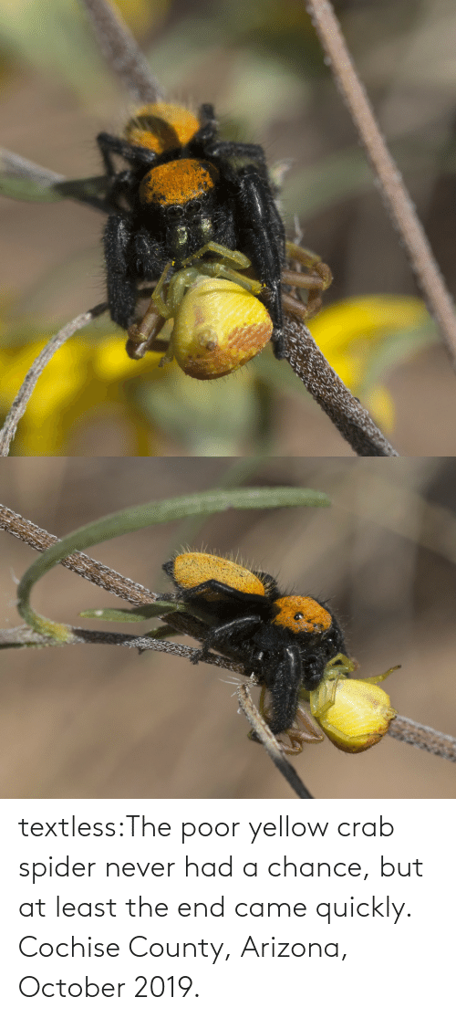 Spider, Tumblr, and Arizona: textless:The poor yellow crab spider never had a chance, but at least the end came quickly.  Cochise County, Arizona, October 2019.