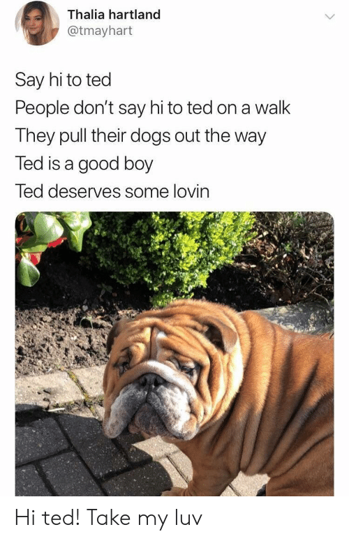 Dogs, Ted, and Good: Thalia hartland  @tmayhart  Say hi to ted  People don't say hi to ted on a walk  They pull their dogs out the way  Ted is a good boy  led deserves some lovin Hi ted! Take my luv