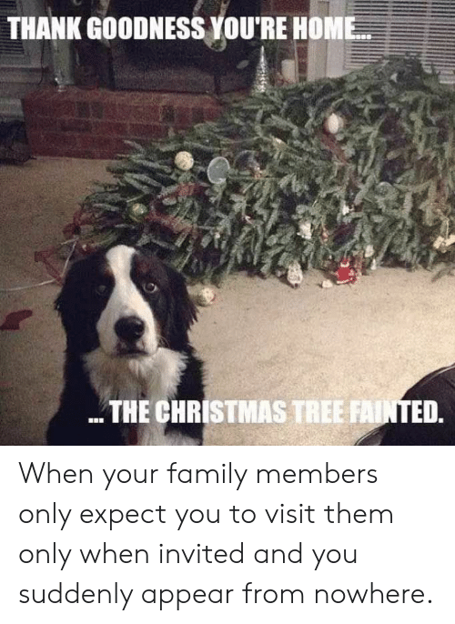 Christmas Tree: THANK GOODNESS YOU'RE HOME  THE CHRISTMAS TREE FAINTED. When your family members only expect you to visit them only when invited and you suddenly appear from nowhere.
