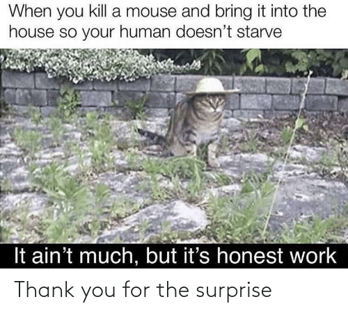 surprise: Thank you for the surprise