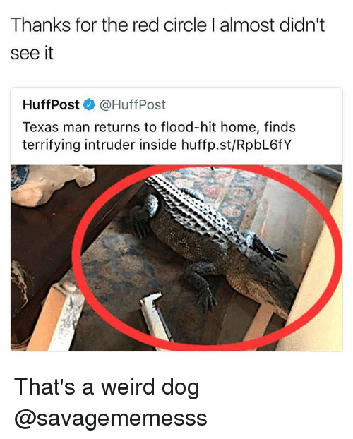 homed: Thanks for the red circle l almost didnt  see it  HuffPost@HuffPost  Texas man returns to flood-hit home, finds  terrifying intruder inside huffp.st/RpbL6fY That's a weird dog @savagememesss