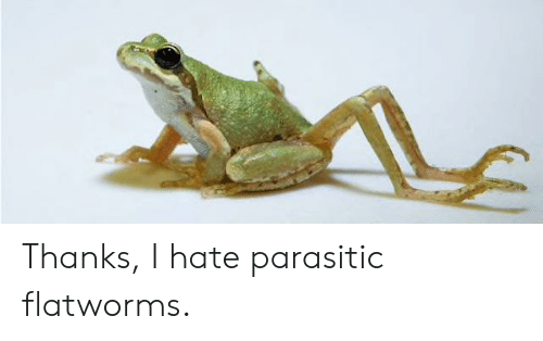 Hate, Thanks, and I Hate: Thanks, I hate parasitic flatworms.