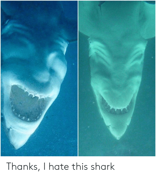 Shark, This, and Hate: Thanks, I hate this shark