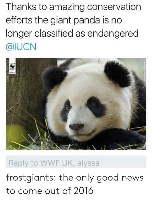 giant panda: Thanks to amazing conservation  efforts the giant panda is no  longer classified as endangered  @IUCN  wwF  w  Reply to WWF UK, alyssa  O naturepl.com /Andy Rouse/WWF frostgiants:  the only good news to come out of 2016