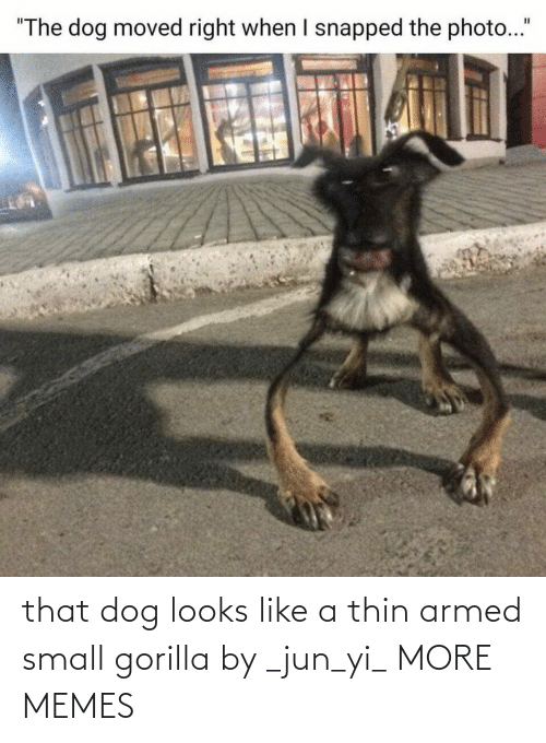Jun: that dog looks like a thin armed small gorilla by _jun_yi_ MORE MEMES