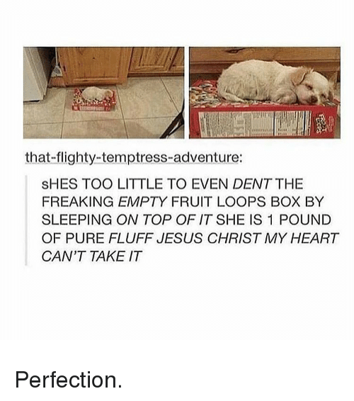 Fruit Looping: that flighty-temptress-adventure:  SHES TOO LITTLE TO EVEN DENT THE  FREAKING EMPTY FRUIT LOOPS BOX BY  SLEEPING ON TOP OF IT SHE IS 1 POUND  OF PURE FLUFF JESUS CHRIST MY HEART  CAN'T TAKE IT Perfection.